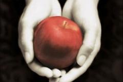 Twilight-Chapitre-1-Fascination-Le-livre_portrait_w532.jpg